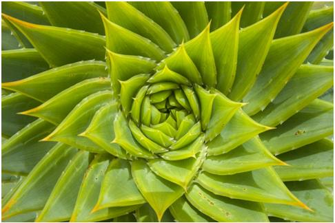 THE MIGHTY ALOE VERA PLANT